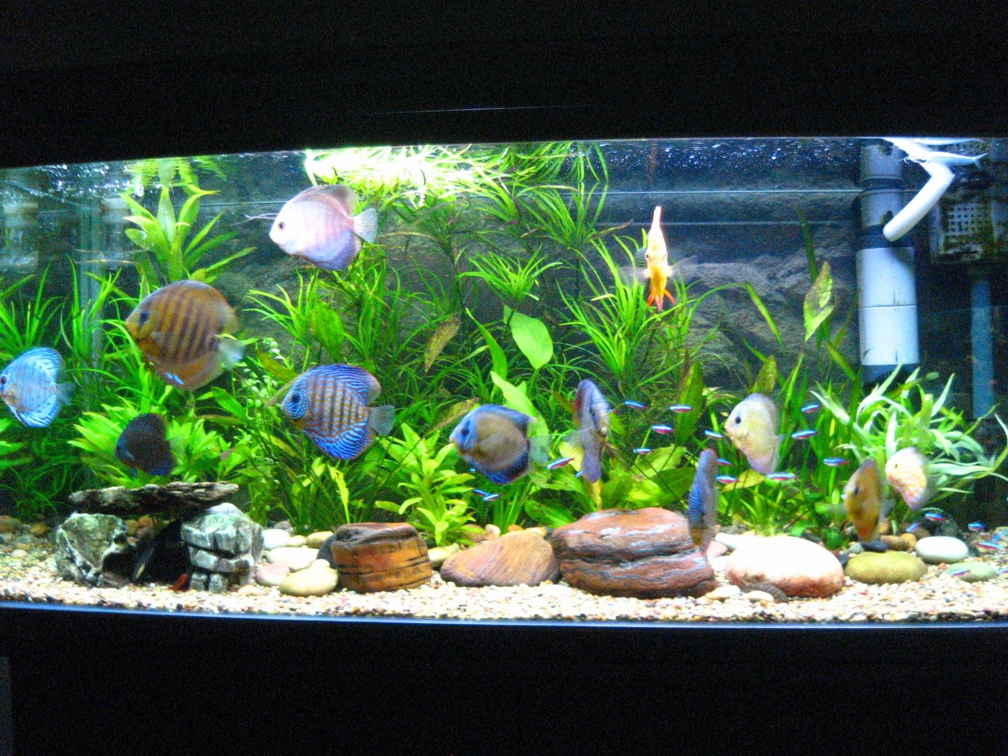Contest Aquarium Pictures