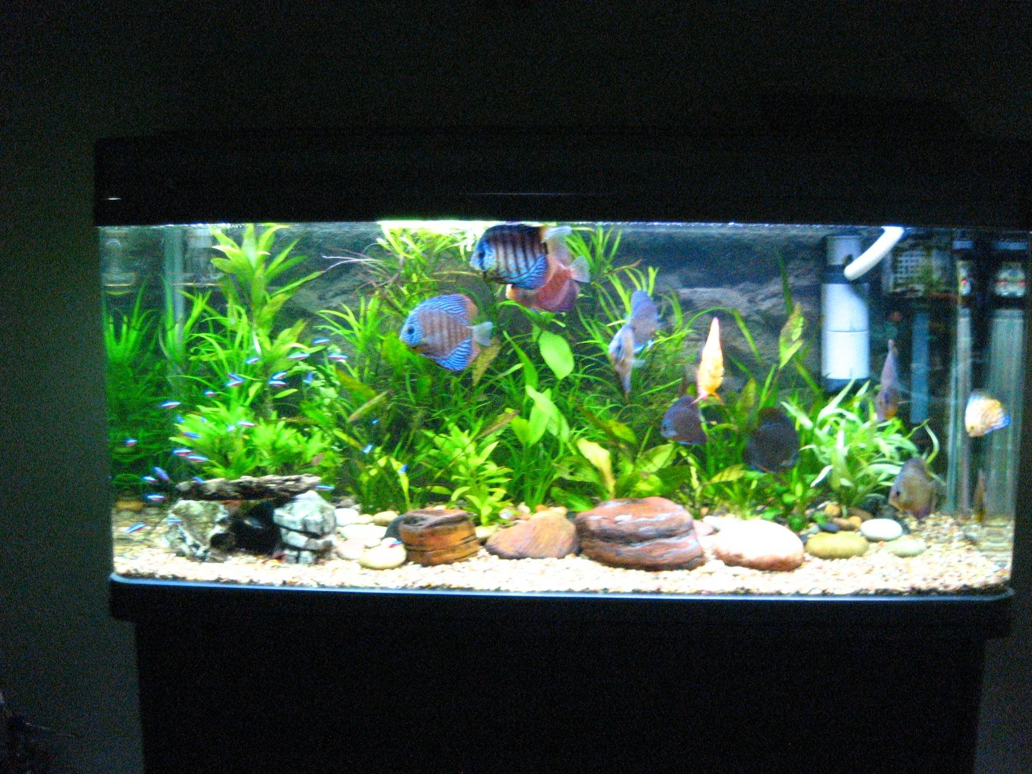 Home aquarium decoration design ideas for house for Good fish for small tanks