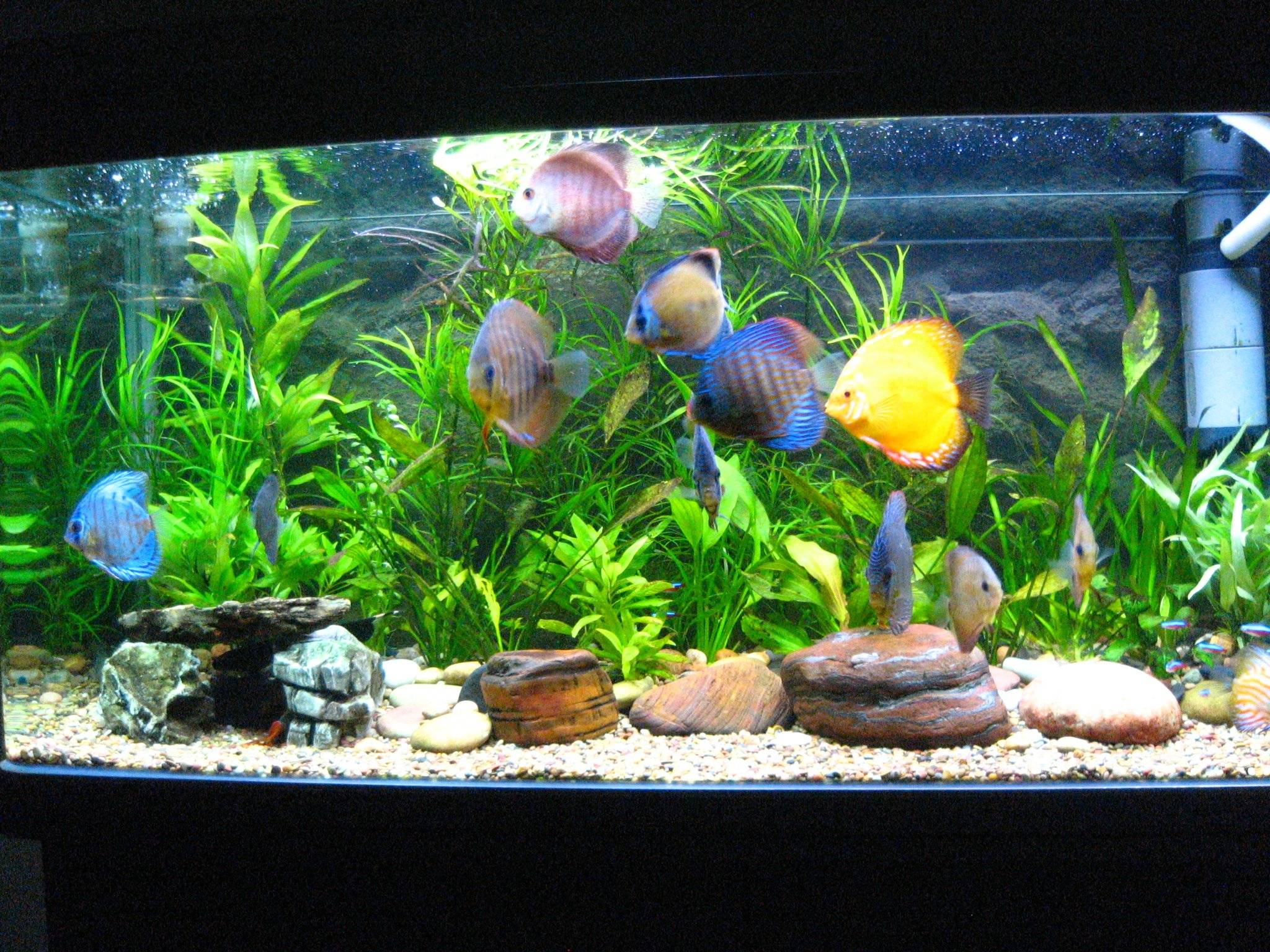 Screensavers Free Discus Fish Tank Review Ebooks